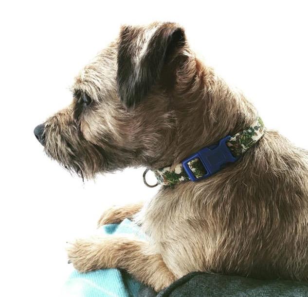 Edie fabric dog collar